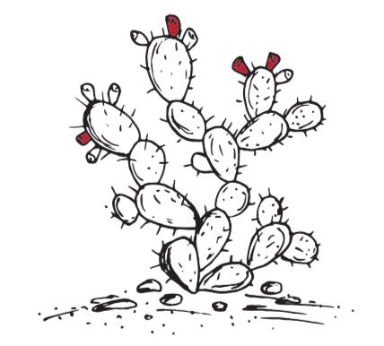 Cartoon Drawing of Prickly Pear Cactus